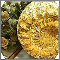 AMMONITE Fossile - 28 000 grammes - 160x410x460 mm - R003